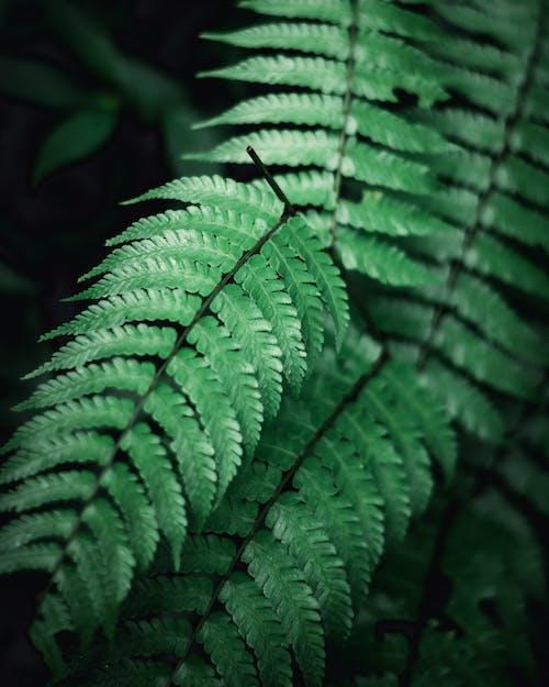Grüne Farnpflanze