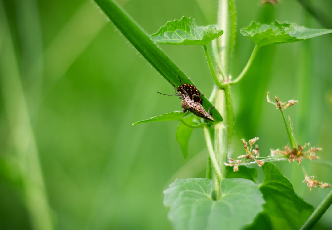 field, green, insect