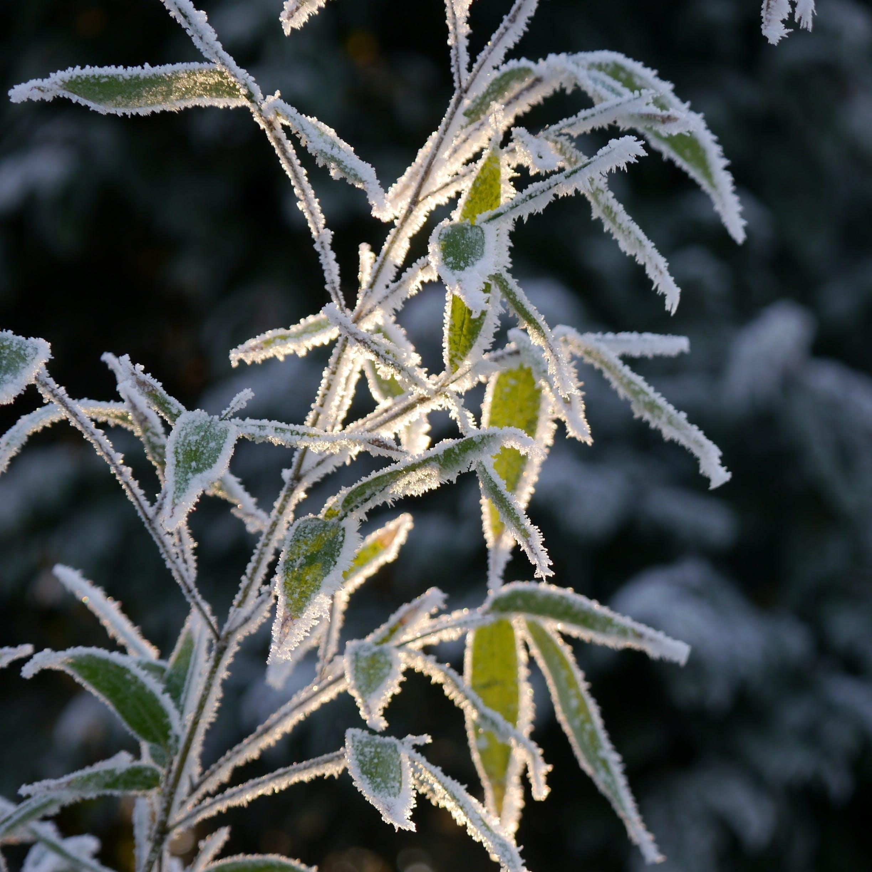 Free stock photo of snow, winter, frozen, ice