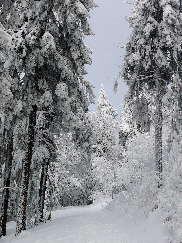 Free stock photo of cold, snow, light, landscape