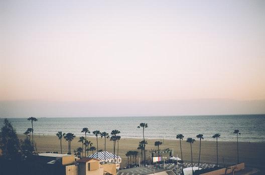 Free stock photo of sea, beach, palms