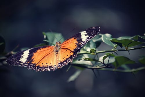 Free stock photo of botanic garden, butterfly, zoo