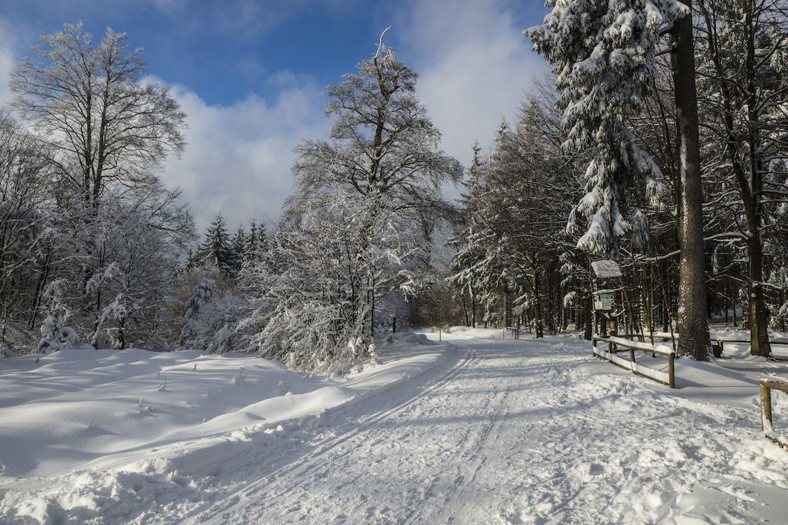 bílá, krajina, les