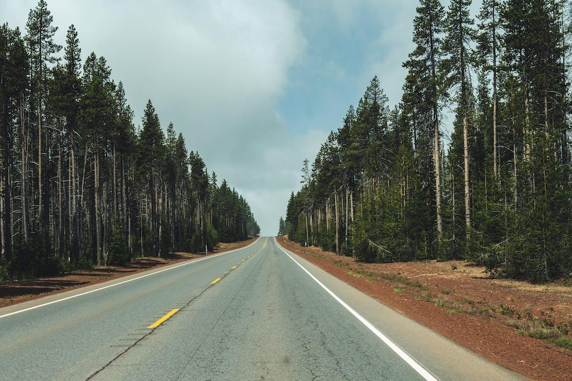 árvores, asfalto, calçada