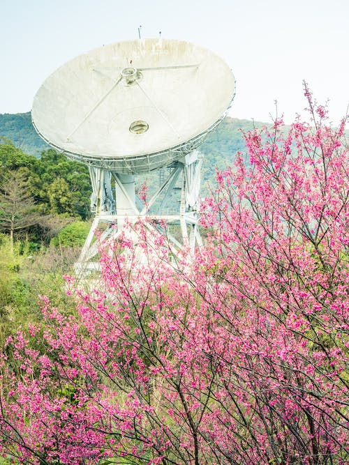 Shallow Focus Photo of Pink Flowers Near Satellite Dish