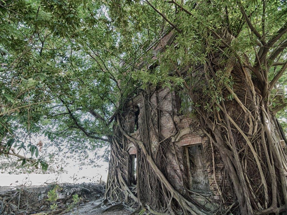 arbre, edifici abandonat, fantasma
