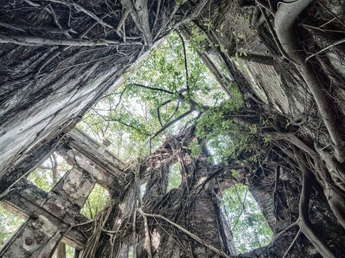 Darmowe zdjęcie z galerii z drzewo, duch, opuszczony budynek, 民 雄