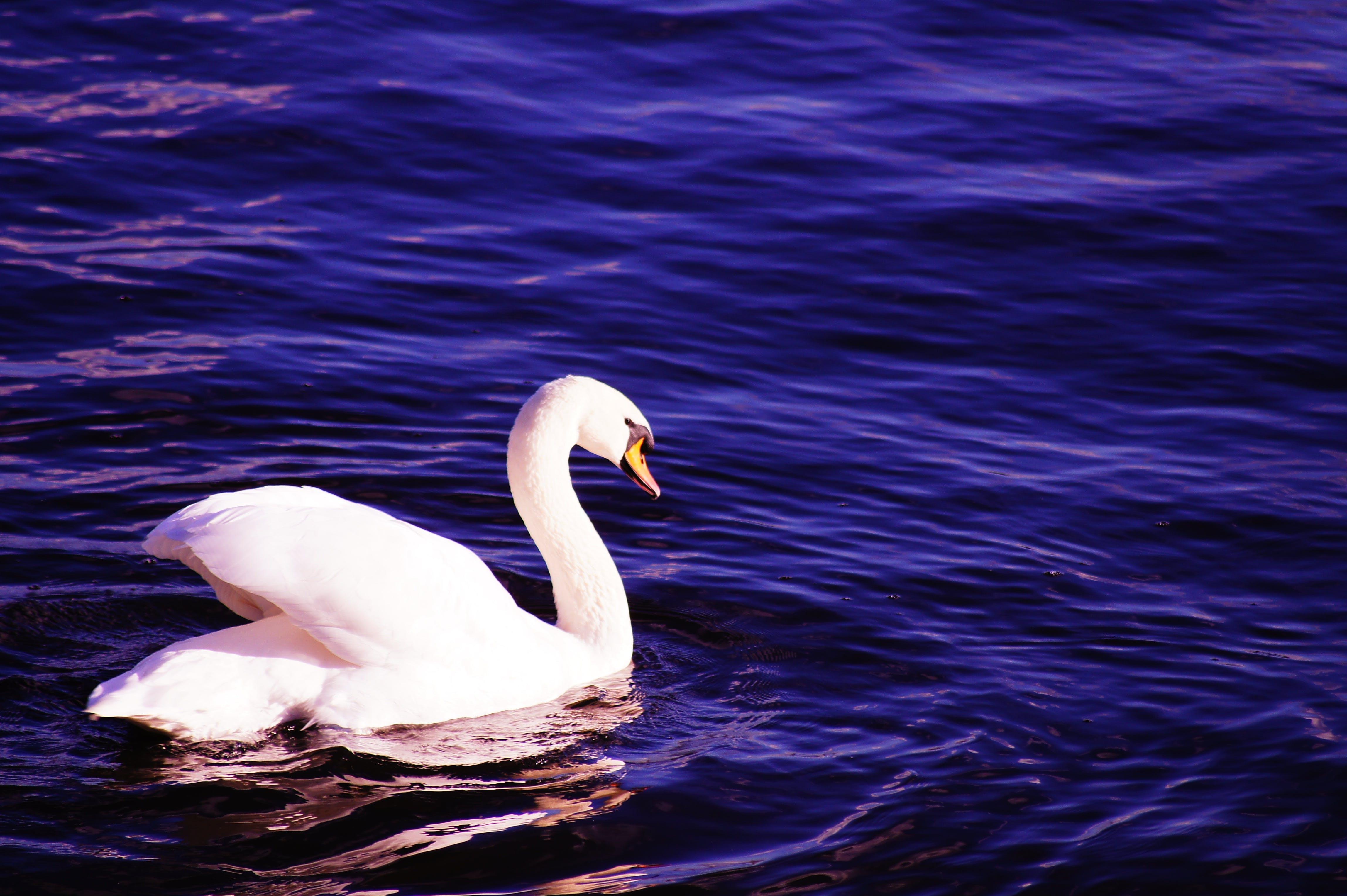 Free stock photo of nature, bird, water, wave