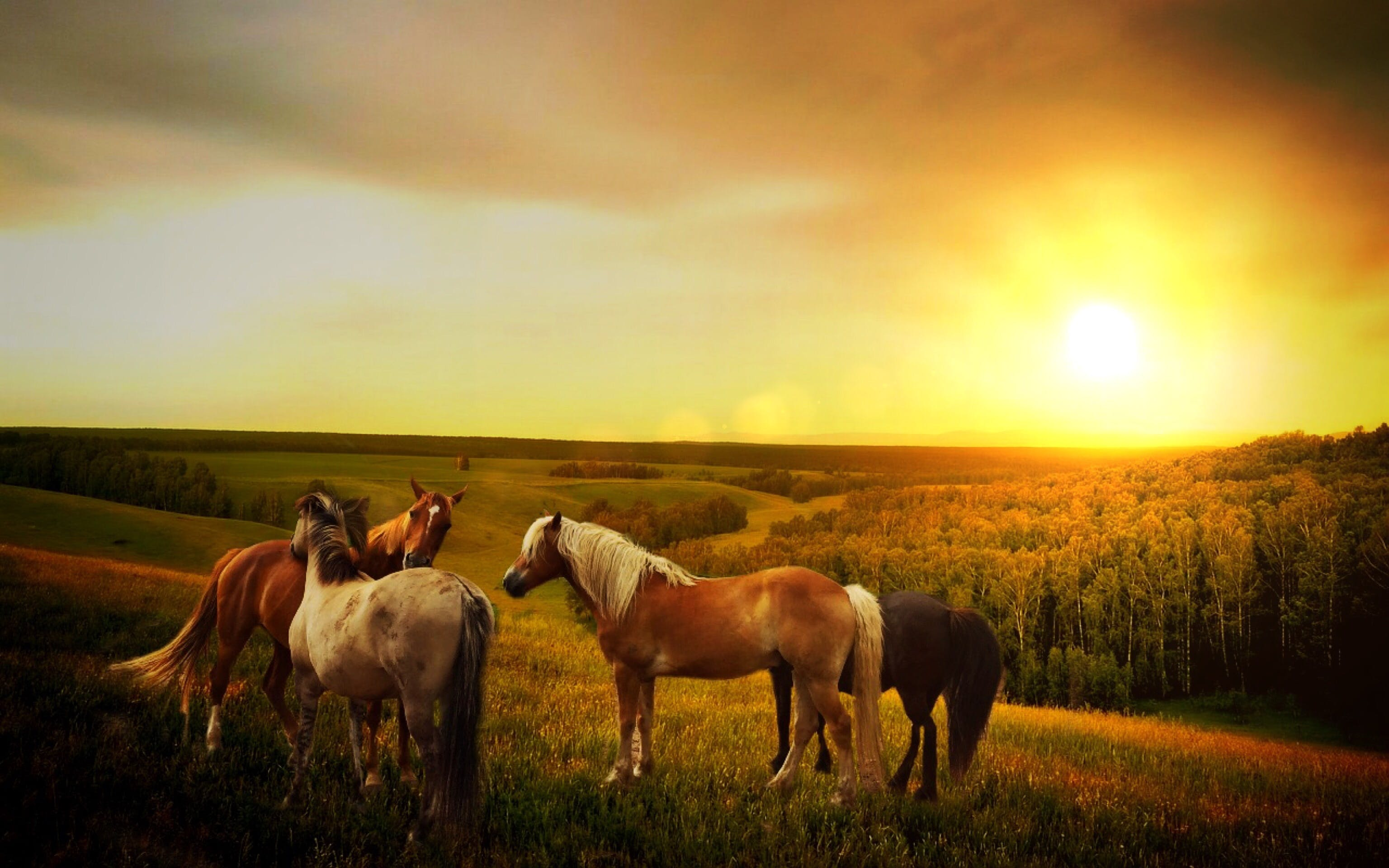 Four Brown-white-and-black Horses