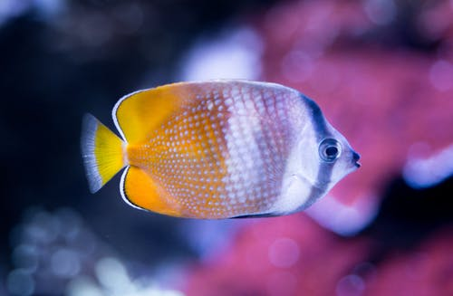 White and Yellow Fish Close-up Photography