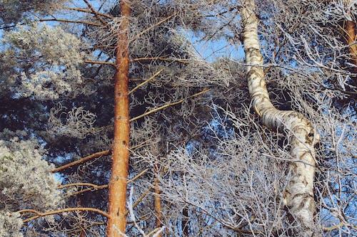Foto d'estoc gratuïta de arbres, branques, paisatge, parc
