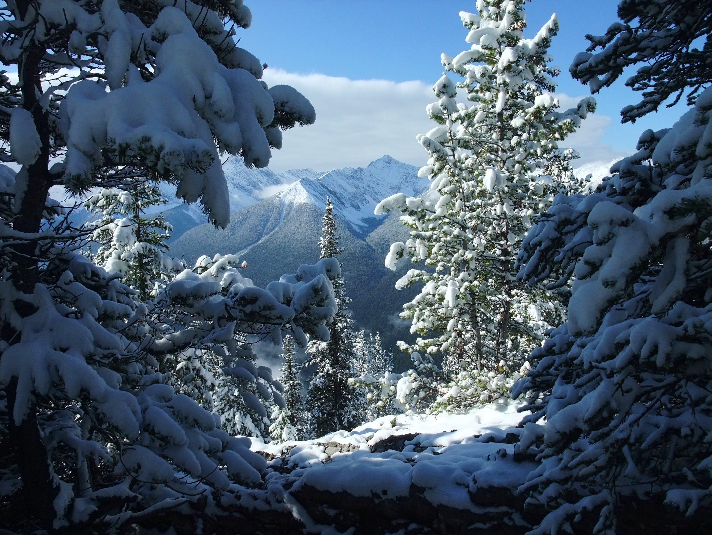 Free stock photo of banff, canada, snow, white