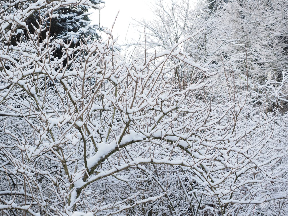 ağaçlar, ahşap, beyaz