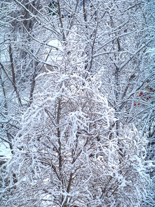 Základová fotografie zdarma na téma chlad, dřevo, led, ledový