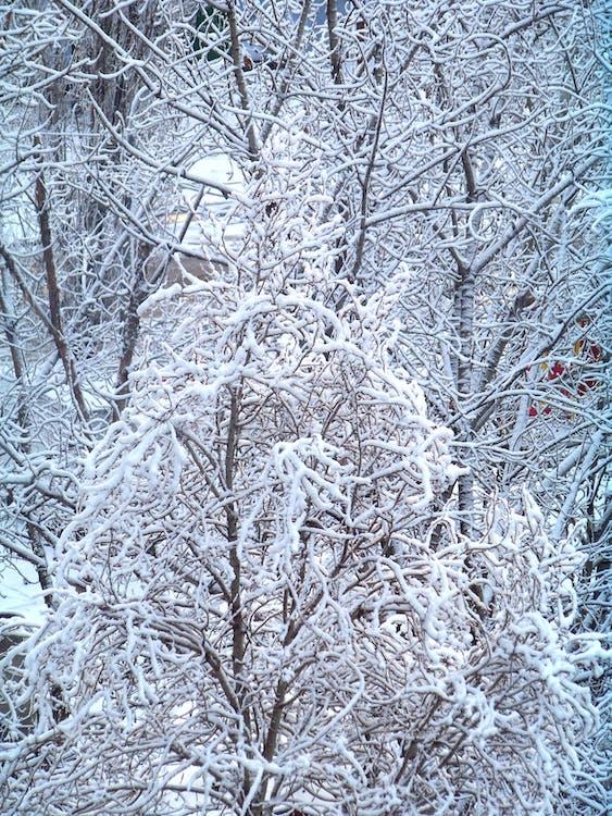 chlad, dřevo, led