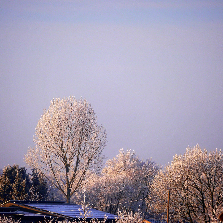 White Petaled Tree Near House