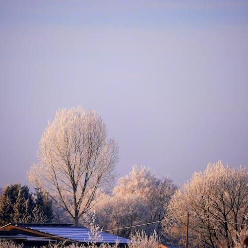 Бесплатное стоковое фото с деревья, крыша, небо, туман