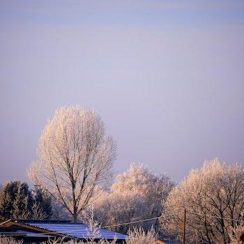 Free stock photo of sky, trees, fog, roof