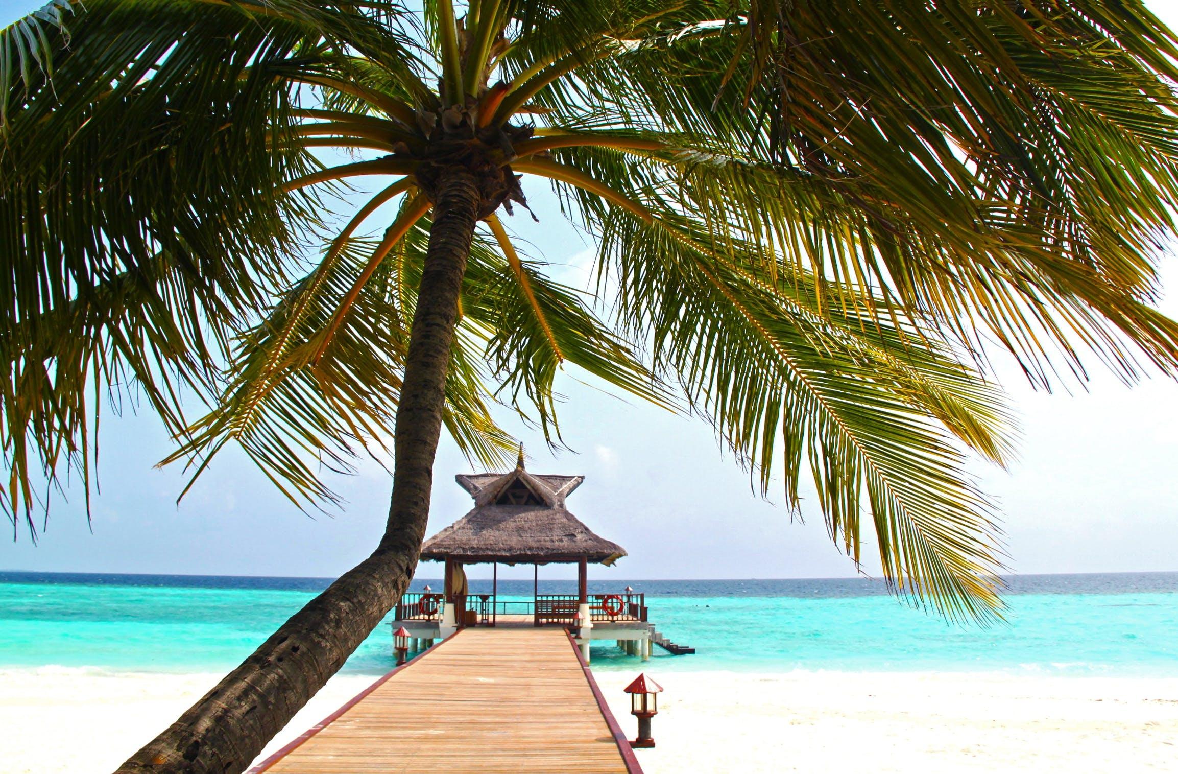 Beach Dock With Palm Tree