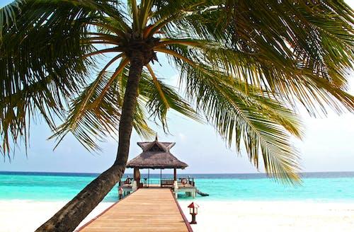 Photos gratuites de bleu, bord de mer, cocotier, complexe