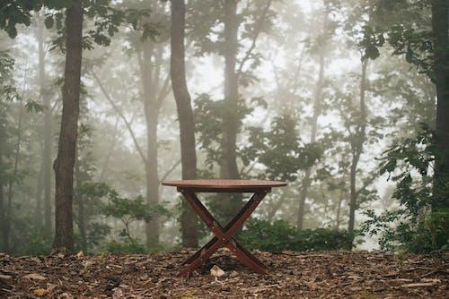숲, 안개, 안개 낀, 테이블의 무료 스톡 사진