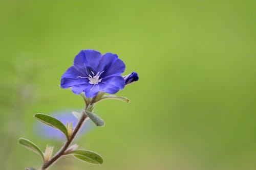 Ingyenes stockfotó gyár, gyönyörű virágok, háttérkép, kék témában