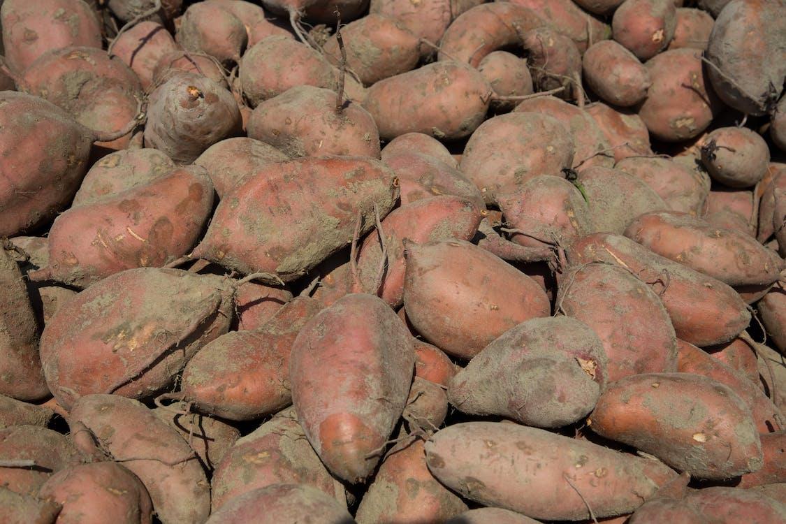 agbiopix, polní plodina, sladká brambora