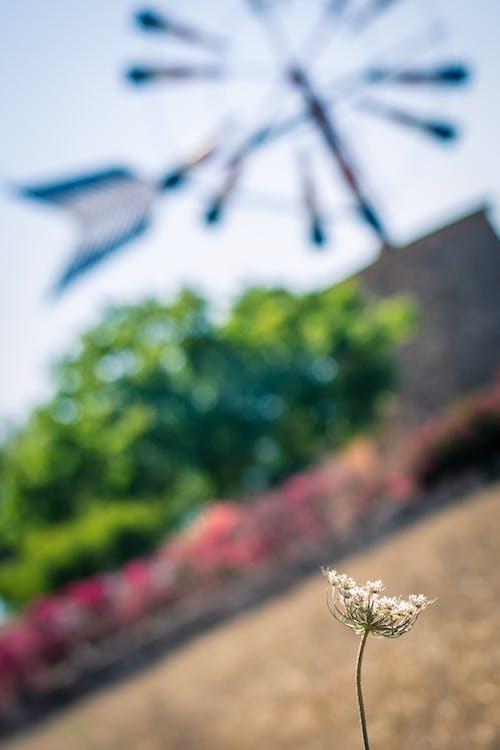 ağaçlar, alan, bokeh, çiçek içeren Ücretsiz stok fotoğraf