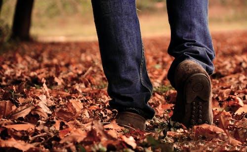 Immagine gratuita di albero, azzurro, bel paesaggio, bella vista