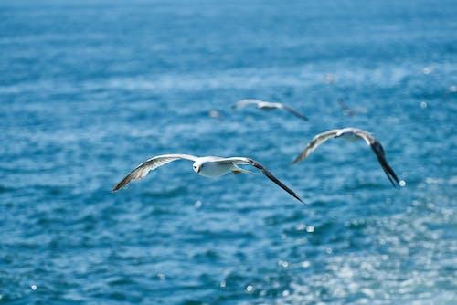 Ilmainen kuvapankkikuva tunnisteilla aallot, kärpänen, Kauneus, kaunis