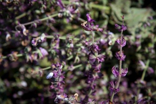คลังภาพถ่ายฟรี ของ agbiopix, การเกษตร, ปัญญาชนงวงช้าง, พืชผล