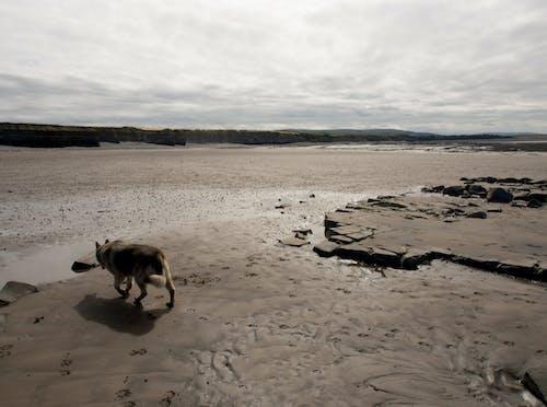 Darmowe zdjęcie z galerii z pies, plaża, zwierzę domowe
