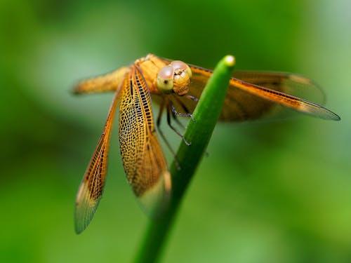 Macro Photography of Orange Dragonfly