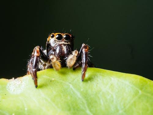 Darmowe zdjęcie z galerii z mały, oczy, pająk, pajęczak