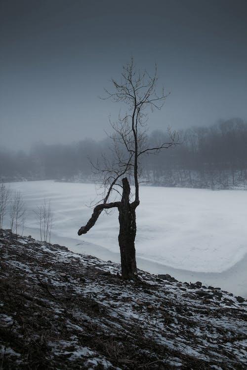 Foto profissional grátis de inverno, paisagem, três
