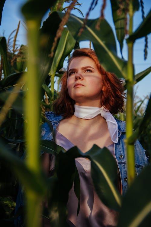 Fotobanka sbezplatnými fotkami na tému džínsová bunda, kukuričné pole, na zvislo, ryšavé vlasy