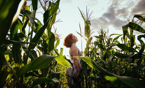 Woman At A Cornfield
