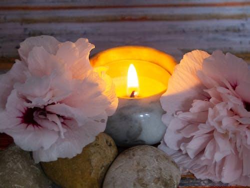 不錯, 光, 燭光, 玫瑰 的 免費圖庫相片
