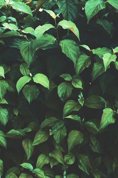 Fotobanka sbezplatnými fotkami na tému listy, rastlina, záhrada, zelená