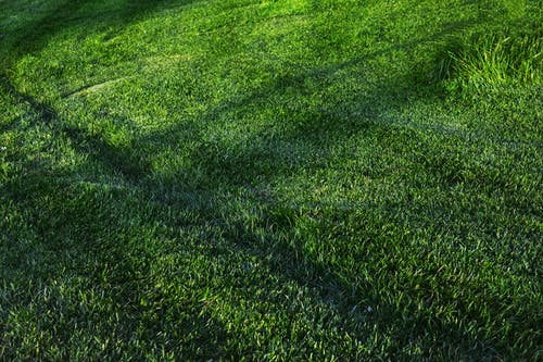 Foto d'estoc gratuïta de camp, camp d'herba, cobert de gespa, creixement