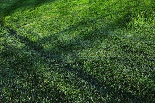 Foto stok gratis alam, berumput, bidang, Daun-daun