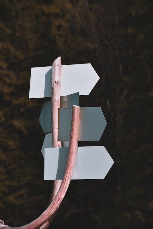 Бесплатное стоковое фото с дерево, дневной свет, знак, на открытом воздухе