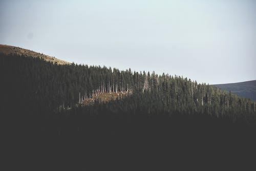 Bird's Eye View Of Mountain During Daytime