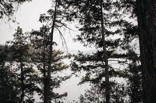 樹木, 湖, 蒙大拿 的 免费素材照片