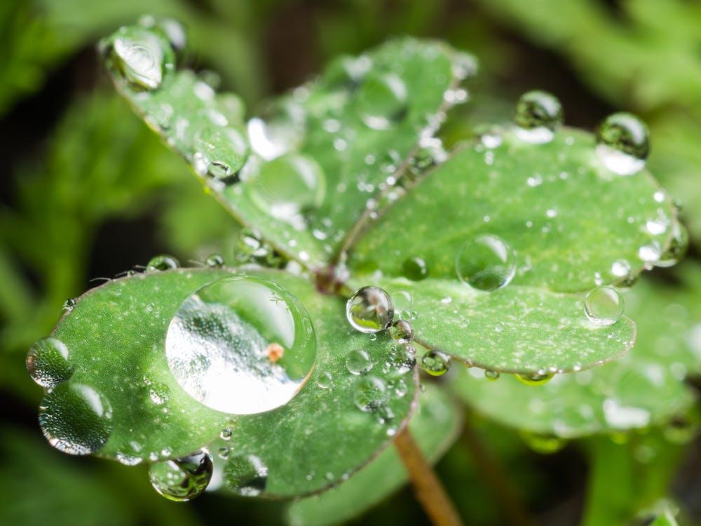 หยดน้ำ, แมโคร, ใบสีเขียว