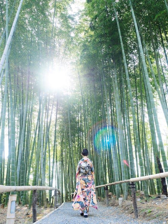 abbigliamento tradizionale, alberi, ambiente