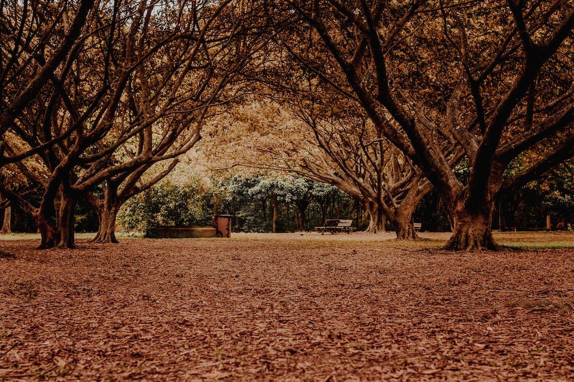 деревья, дневной свет, живописный