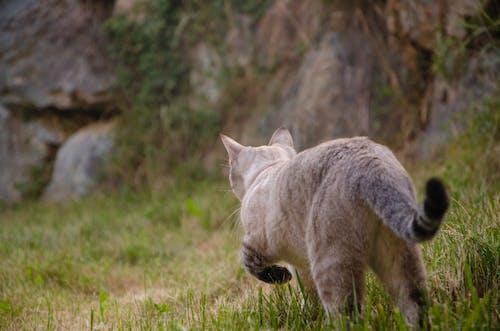 Gratis lagerfoto af jæger, kat, vild, vildt dyr
