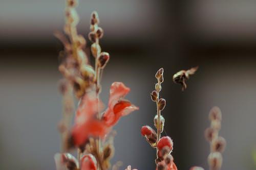 廠, 微妙, 植物群, 模糊 的 免費圖庫相片