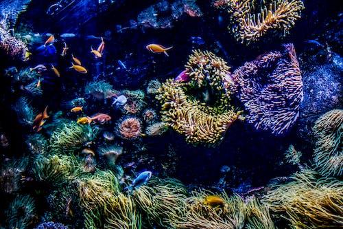 Immagine gratuita di acqua, acquario, acquario di sydney, acquatico